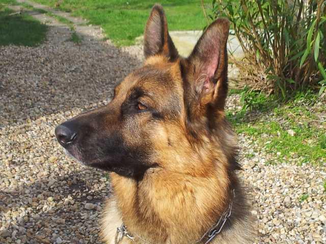 Tom le chien 14