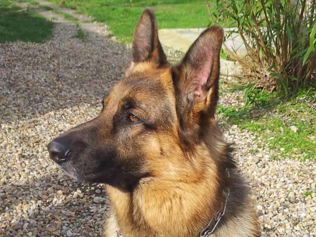 Tom le chien 16