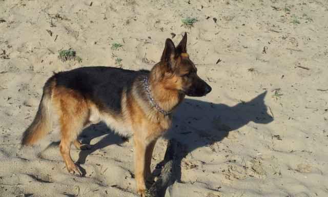 Tom le chien 2