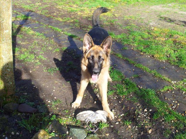Tom mon chien 2