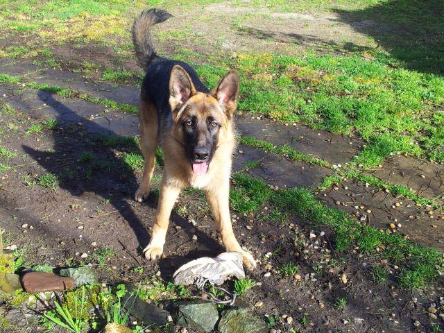Tom mon chien 3