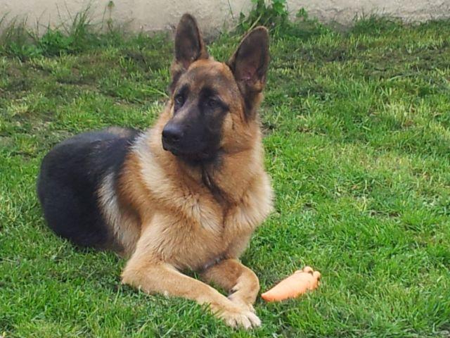 Tom mon chien 4