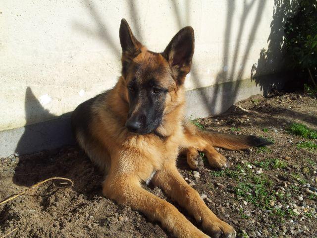 Tom mon chien 5
