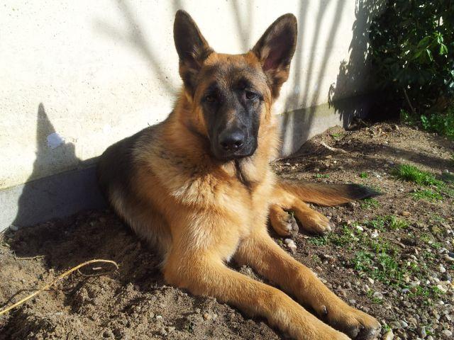 Tom mon chien 6