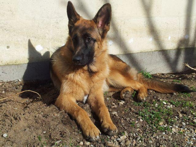 Tom mon chien 7